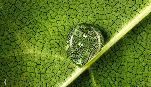 Ingrandimento di una foglia verde con goccia d'acqua