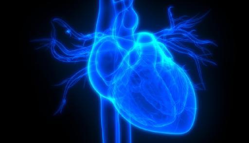 Immagine stilizzata del cuore