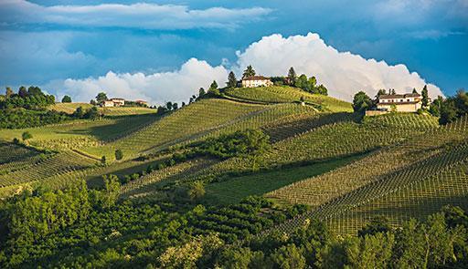 Veduta di una collina del Monferrato