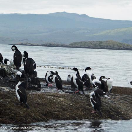 Argentina - Terra del Fuoco: pinguini nel Canale di Beagle