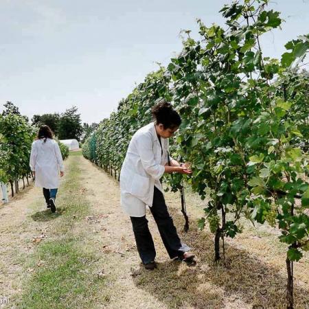Polo universitario di Grugliasco - Scuola di Agraria e Medicina Veterinaria