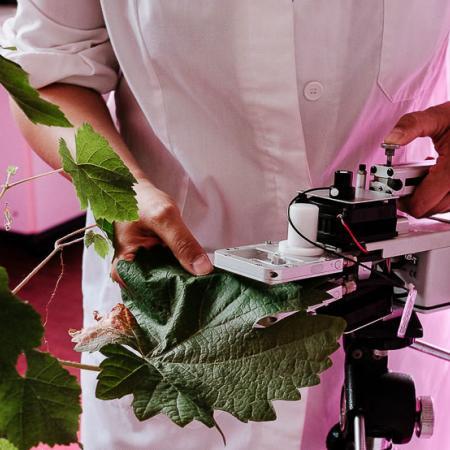 Laboratorio di ricerca - Scuola di Agraria e Medicina Veterinaria