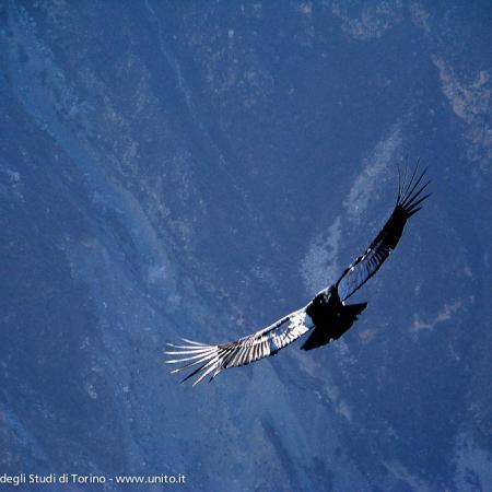 Perù - Cruz del Condor