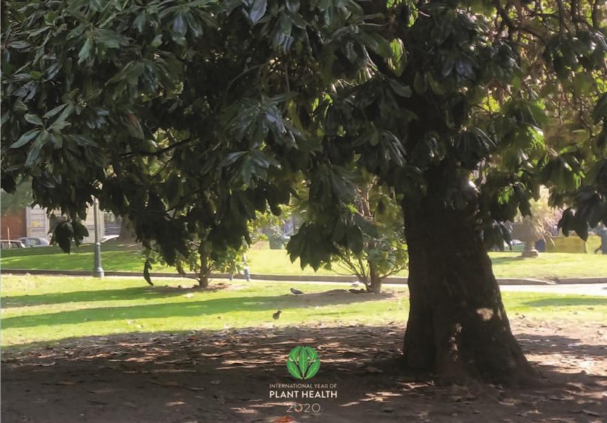 Prato con alberi dal fogliame verde scuro